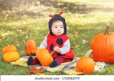 Cute adorable Asian Chinese baby girl in ladybug costume sitting in autumn fall park outdoor.  Funny infant kid in costume on farm with pumpkins. Halloween or Thanksgiving seasonal concept.