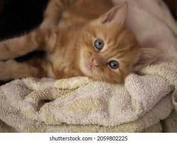 Cute adorable baby kitten on blanket portrait shot medium shot selective focus