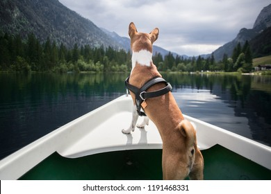 Cute and adorable little puppy or dog of basenji breed stands on edge of boat front overlooking the scenery and views of beautiful mountain lake, curious and excited and outdoor adventures
