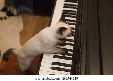 Cute adorable pussycat is playing the keyboard