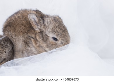 cute and adorable sleeping baby rabbit on white cloth as dreamy photo of newborn pet