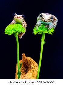 Cute amphibians in their action
