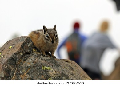 Cute Animal - Chipmunk on the rock