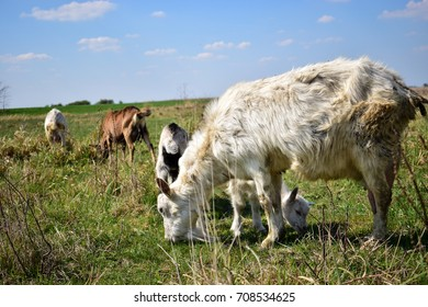 Cute animals on the beautiful meadow