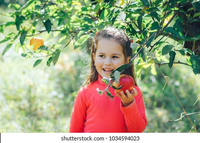 cute asian appearance girl collects apples in the garden