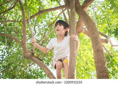 Cute asian boy climbing a tree in the park