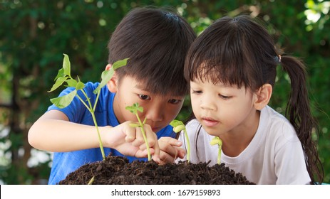 Cute Asian boys and girls That has a heart to love the world Helping each other to plant trees from black soil In order to hope for the world to be green and fresh air to breathe, Earth day concept