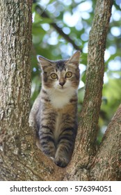 Cute Asian Cat Sitting On A Tree With Blur Background