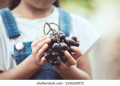 Cute asian child girl holding bunch of red grapes harvested by herself in the vineyard