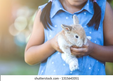 Cute asian child girl playing with little bunny rabbit with love and tenderness