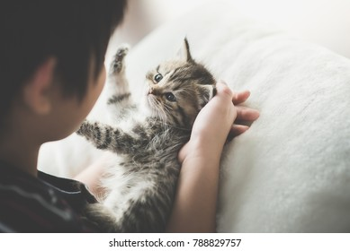 Cute asian child playing with short hair kitten