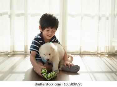 süßes asiatisches Kind, das im Wohnzimmer mit weißem siberischem Husky-Welpe spielt