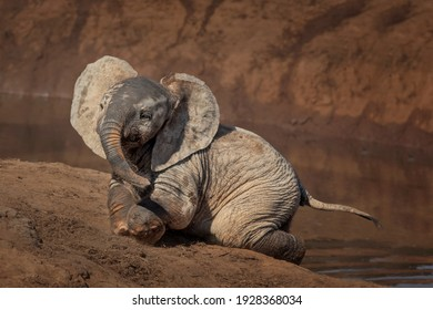 Cute baby African elephant at a waterhole in Addo Elephant National Park