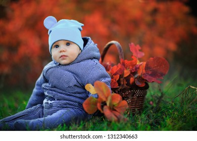 Cute baby in autumn park. Little boy sits on grass with a basket of leaves. Portrait toddler kid outdoors.