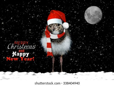 Cute baby bird wishing you happy holidays