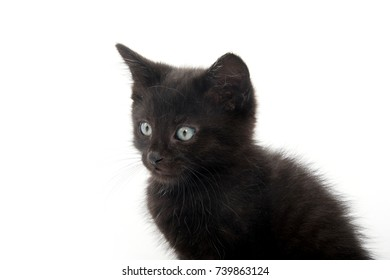 Cute baby black kitten isolated on white background