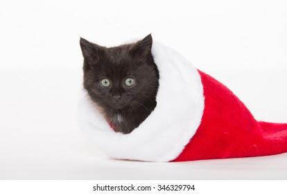 Cute baby black kitten sitting inside of red Christmas stocking on white background