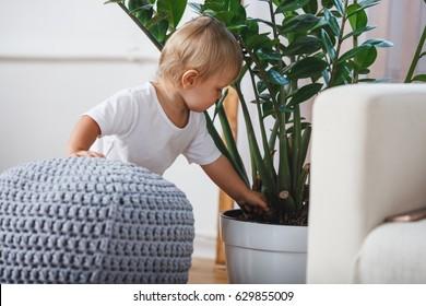 cute baby boy exploring home plants indoors