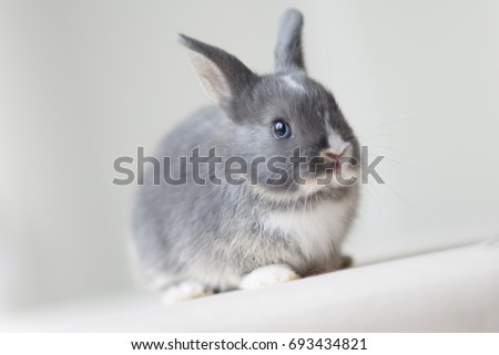 cute baby bunny grey white spots stock photo edit now 693434821