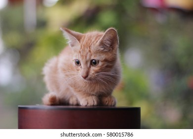 Baby Cat Images Stock Photos Vectors Shutterstock