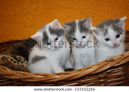 Cute Baby Cat Basket Stock Photo Edit Now 533102266 Shutterstock