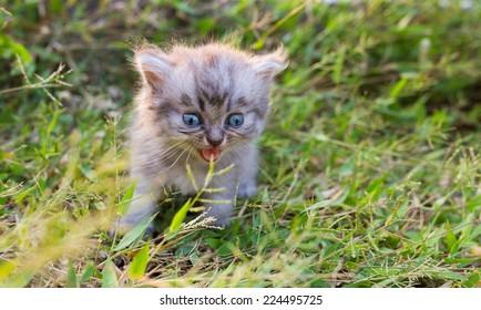 Cute baby cat in grass field