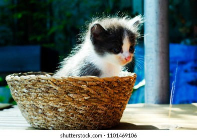 Cute baby cat on basket at home