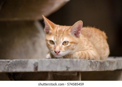 cute baby cat on staircase looking to