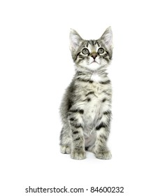 Cute baby cat with tabby markings on white background