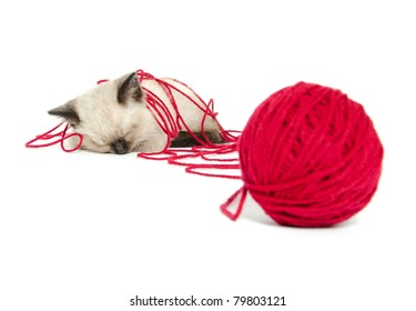 Cute baby cat taking a nap after playing with a ball of red yarn on white background