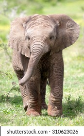 baby elephant images stock photos vectors shutterstock