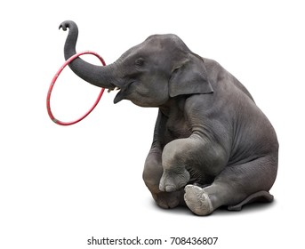 Cute baby elephant playing hulahoop isolated on white background with clipping path