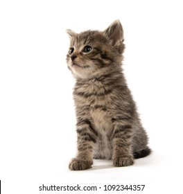 Cute baby four-week-old tabby kitten isolated on white background