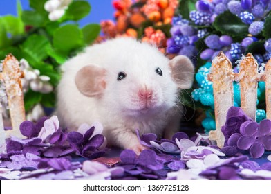 cute baby funny baby rat is white with curly hair and big ears Dumbo is sitting on a glade of purple paper flowers next to the cardboard fence. Chinese New Year symbol