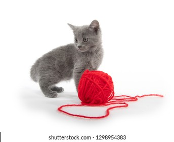 Cute baby gray kitten with red ball of yarn isolated on white background