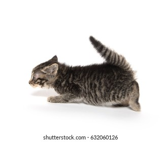 Cute baby kitten sneaking up on a toy isolated on white background