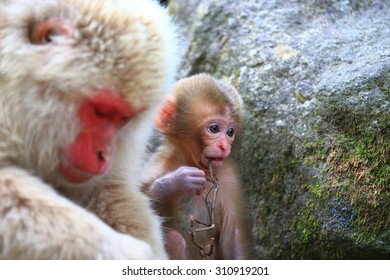 Cute baby monkey closeup