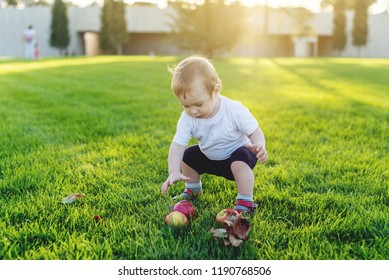 Cute baby playing with apples on a green lawn in the Park. The concept one-year-old child