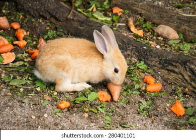 Cute baby rabbit with a carrot