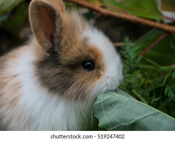 Cute baby rabbit eating vegetables close-up