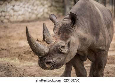 Cute baby rhino at zoo in Berlin