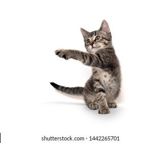 Cute baby tabby cat playing isolated on white background