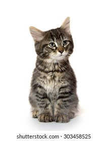 Cute baby tabby domestic shorthair kitten sitting and isolated on white background