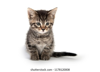 Cute baby tabby kitten isolated on white background