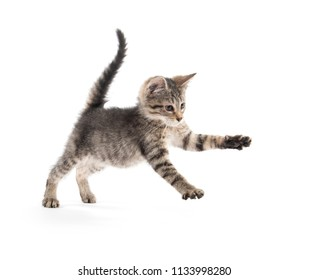 Cute baby tabby kitten jumping and playing isolated on white bacvkground