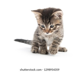 Cute baby tabby kitten looking down isolated on white background