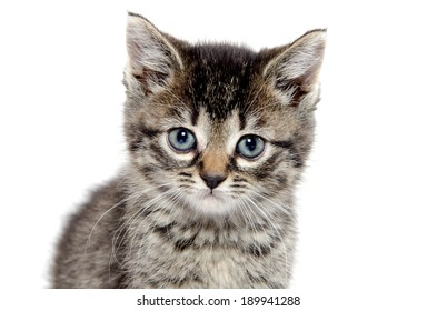Cute baby tabby kitten on a white background