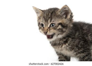 Cute baby tabby kitten on white background