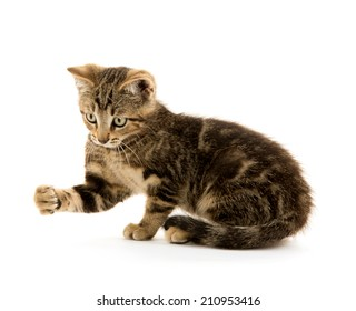 Cute baby tabby kitten playing on white background
