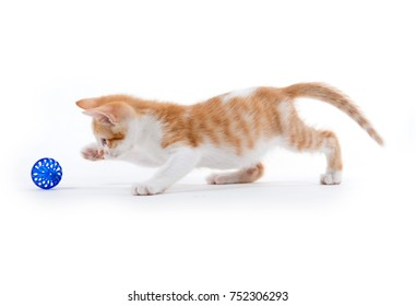 Cute baby tabby kitten playing with ball on white background